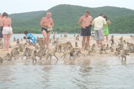 「sattahip naval base thailand monkeys」的圖片搜尋結果